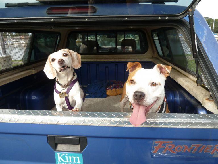 Happy dawgs after a walk